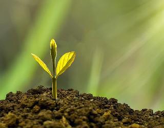 World Environment Day 2021: अपनी राशि अनुसार करें वृक्षारोपण, मेष राशि वाले लंगाएं गूलर का पेड़ तो कन्या राशि वालों के लिए आम का पेड़ शुभ